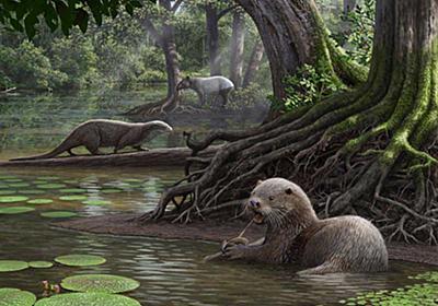 太古の巨大カワウソ、水辺の支配者か、最新研究   ナショナルジオグラフィック日本版サイト