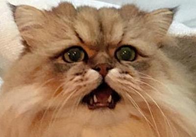 サンクス店長「出勤前に」ローソンで強盗未遂容疑 大阪:朝日新聞デジタル